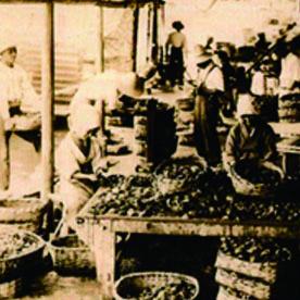 伊勢志摩真珠養殖の歴史